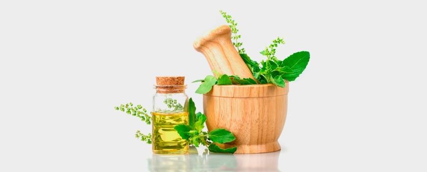 Asesoramiento de plantas medicinales